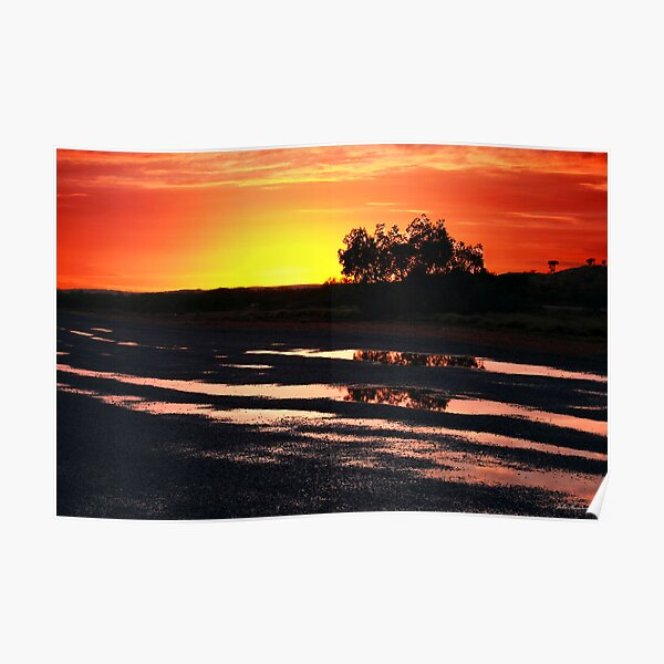 Tree at Sunrise Poster