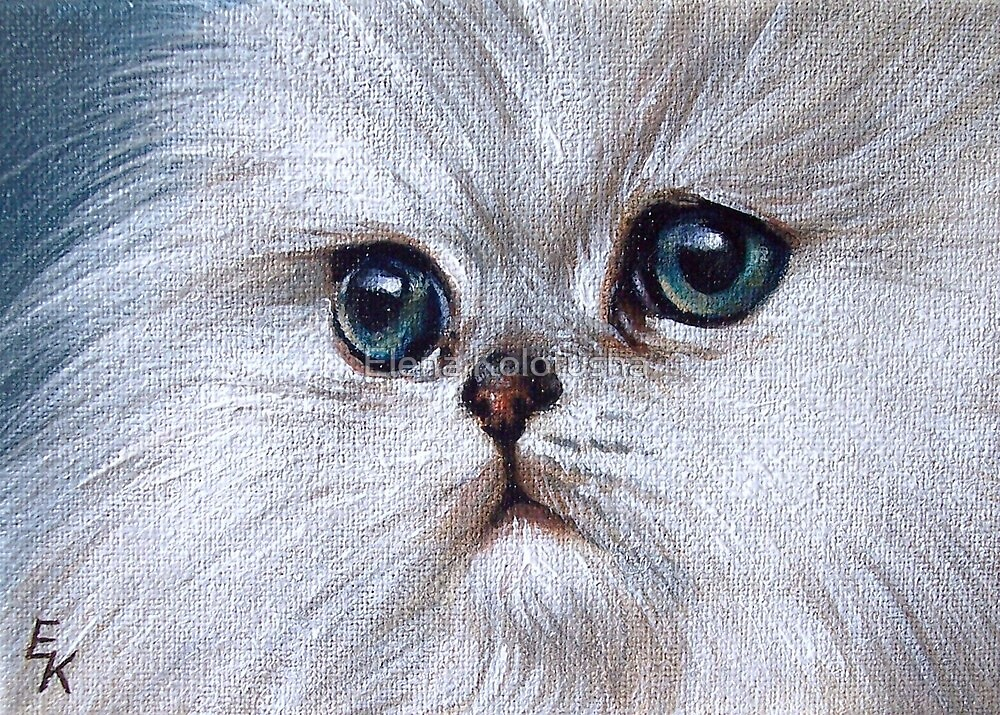 Chinchilla kitten by Elena Kolotusha