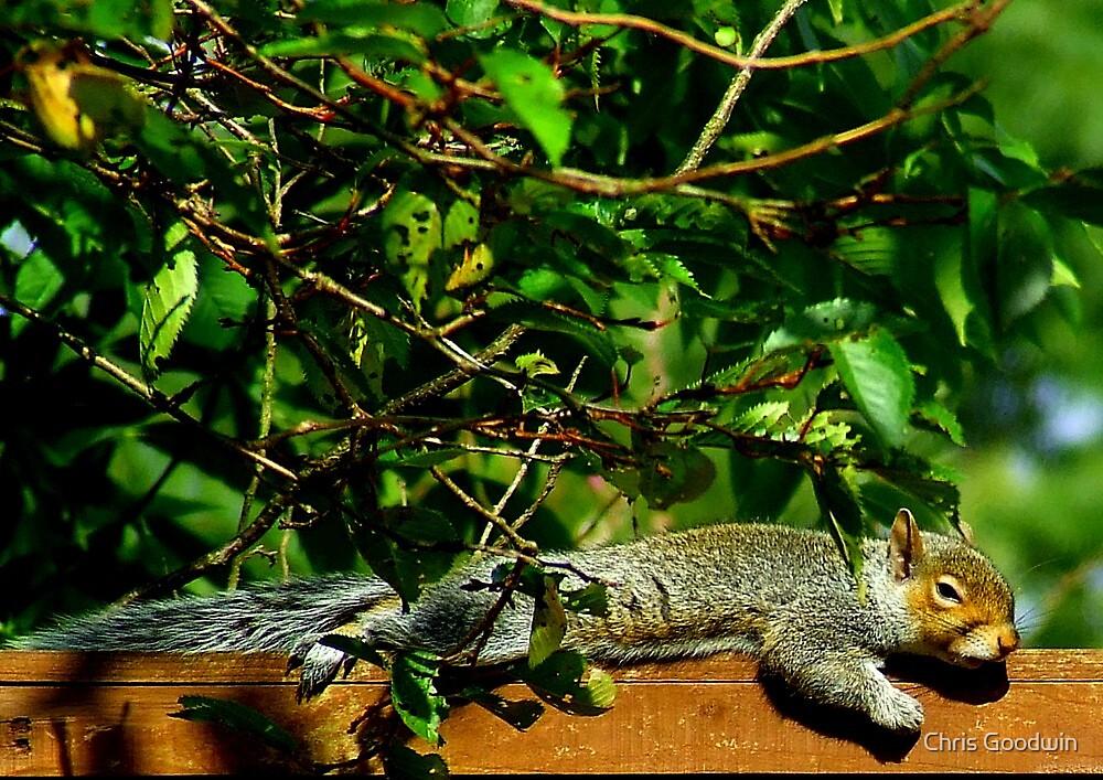 Lazy Dayz by Chris Goodwin