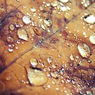 Tears of Autumn by fenist