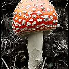 King agaric by fenist