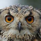 Nipper, The Bengal Eagle Owl by Sandra Cockayne