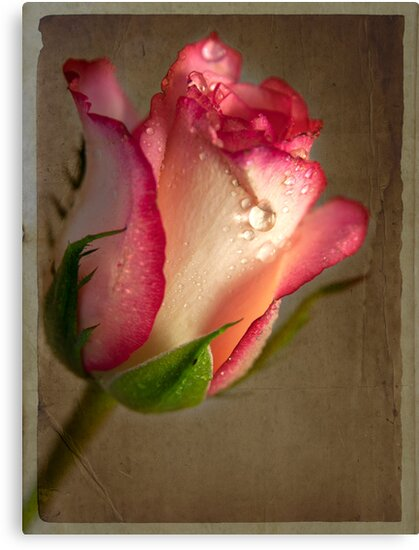 Paper Rose by Theresa Elvin