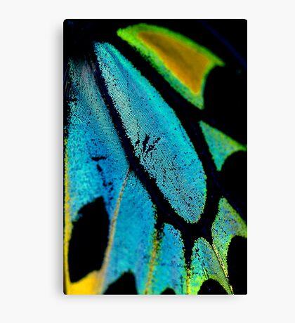 Cairns Birdwing Detail II Canvas Print