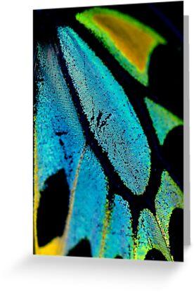 Cairns Birdwing Detail II by Damienne Bingham