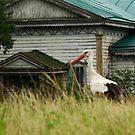 Stork guardian by fenist