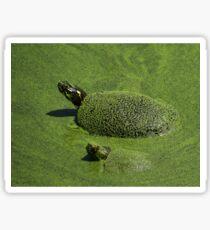 Aquatic Turtle Jacuzzi Sticker