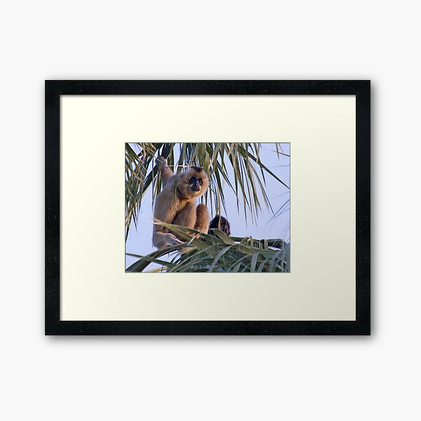 Gibbons Framed Art Print
