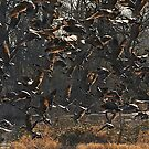 Gaggle of Geese by Carl LaCasse