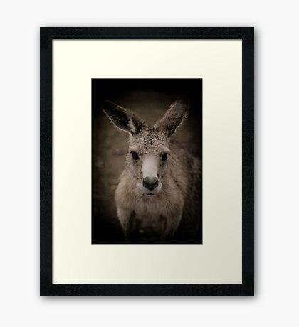 Tasmanian (or rufous bellied) pademelon Framed Art Print