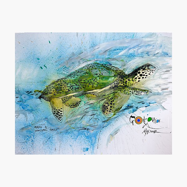 The Endangered Hawksbill Turtle Photographic Print