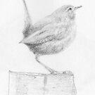 Wren Pencil Sketch by Dean Harkness