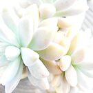 Succulent by minikin