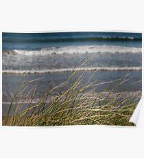 long dune grass Poster