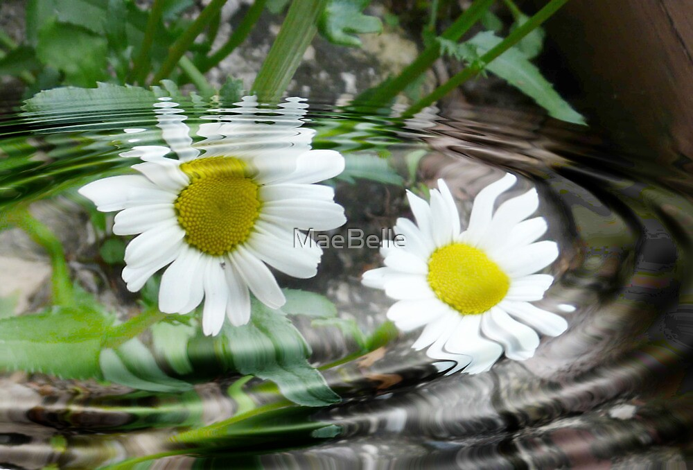 Two Daisys in a Ripple by MaeBelle
