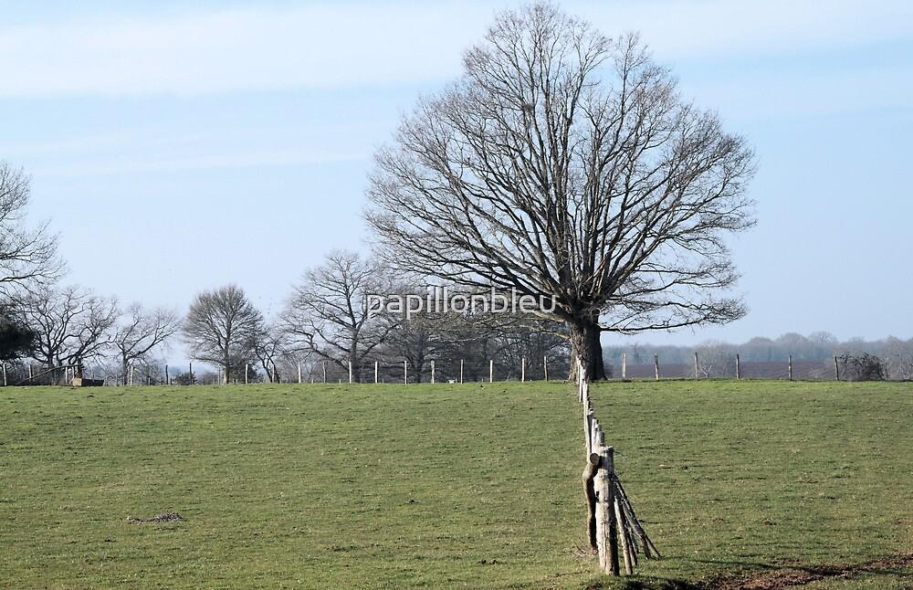The Grand Old Oak! by Pamela Jayne Smith