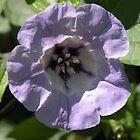 Purple lady.... by supernan