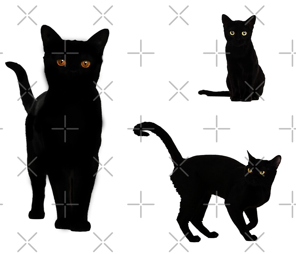 Halloween cats, stickers by ColorsHappiness
