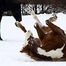 Rollin' in Snow by Barbara Gerstner