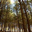 Trees 1  by Evette Lisle