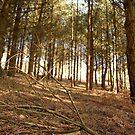 trees 2  by Evette Lisle