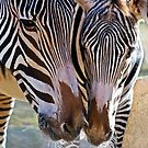 Mom and Babe by Sue  Cullumber
