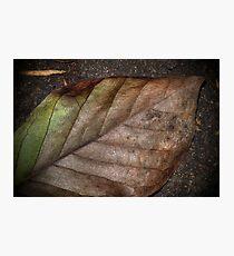leaf Photographic Print