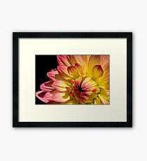 Rose Tipped Framed Print