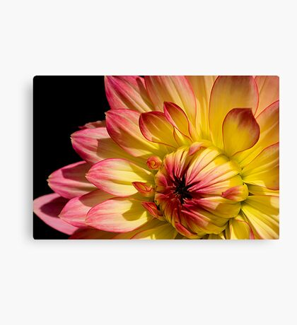 Rose Tipped Canvas Print
