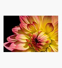 Rose Tipped Photographic Print