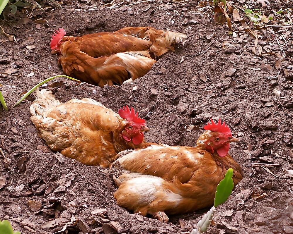 In Chicken Heaven. by Gabrielle  Hope
