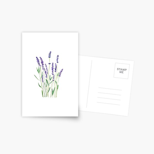 purple lavender  Postcard