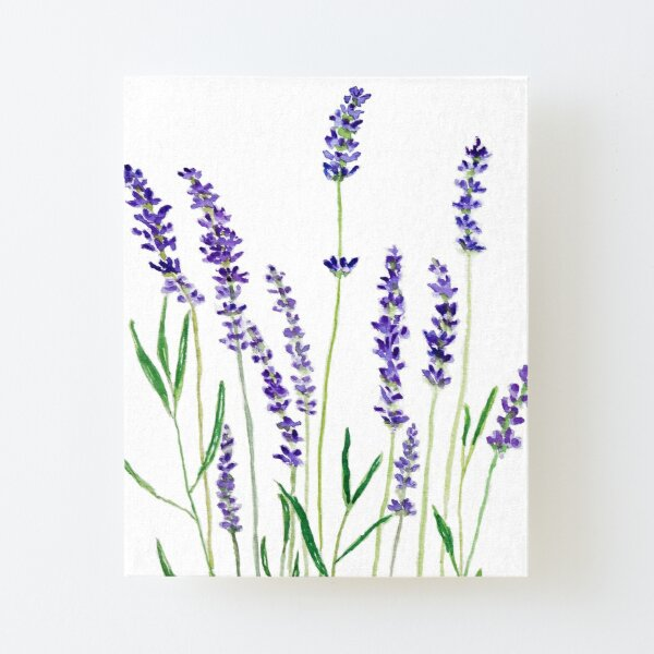 purple lavender  Canvas Mounted Print