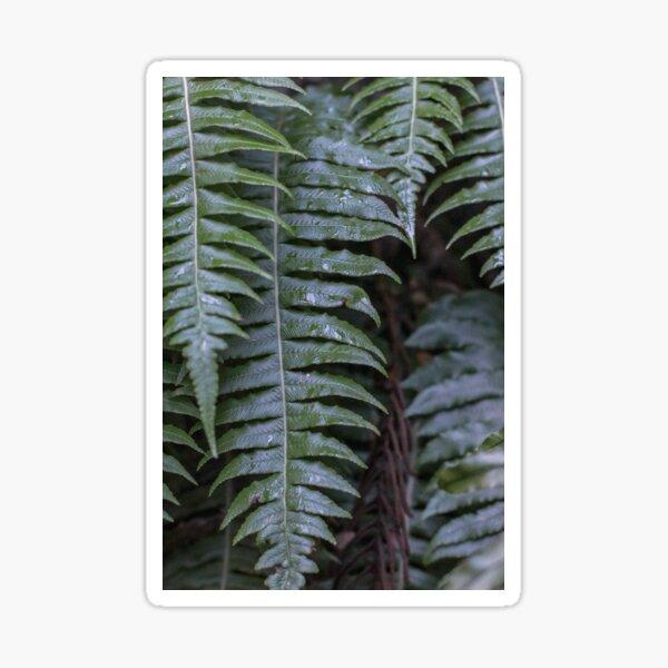 New Zealand fern Sticker
