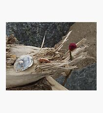 Driftwood - Skegness Photographic Print