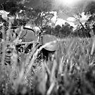 South Australia Farm serie 03 by ZoltanBalogh