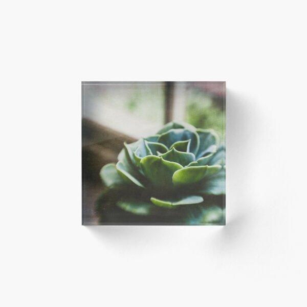 Succulent In The Window Acrylic Block