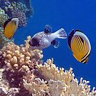 Colorful Red Sea Fish And Corals by hurmerinta