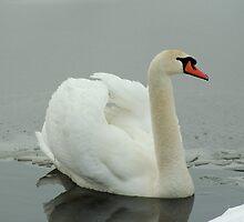 Winter elegance  by steppeland