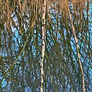 Reed Roots and Reflections by brimo