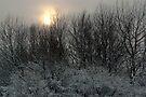 Faint winter sun over the ReedCorner by steppeland