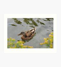 Lor' Love a Duck Art Print