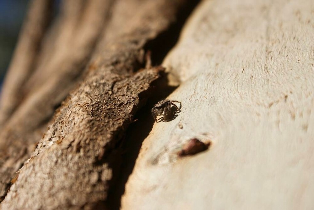 Jumping Spider by FreckledLily