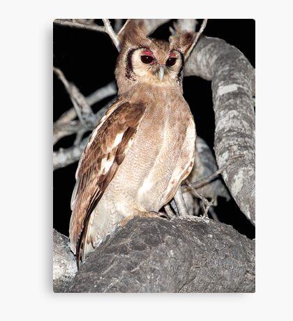 Verreaux's Eagle Owl Canvas Print