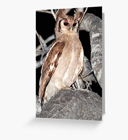 Verreaux's Eagle Owl Greeting Card