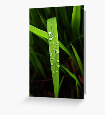 raindrops on grassblade Greeting Card