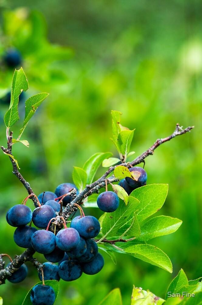 Wild Fruit by Sam Fine