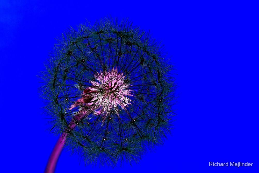 Blue dandelion by Richard Majlinder