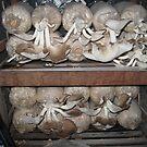Mushroom Farm - Day 11 by Hugh Fathers