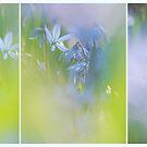 harbingers of spring by VallaV